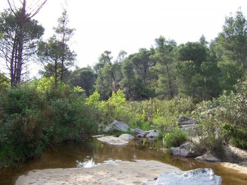 Wanderung entlang eines kleinen Flusses durch ein Naturschutzgebiet von Sithonia.