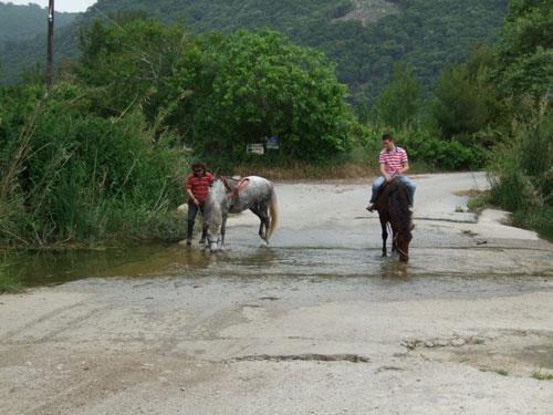 Wenn Pferde durstig sind, haben Autos halt mal zu warten...