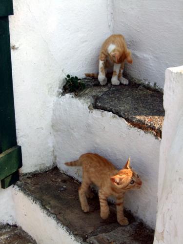 Katzen auf der Mäuseinsel