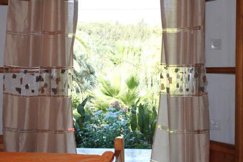 2-Zimmer-Apartment: Blick in den Garten