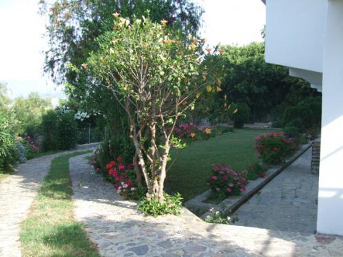 Garten des Hotel Lofos in Plakias