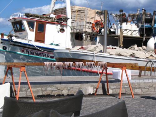 Im Hafen von Parikia (Paros) trocknet der Oktopus