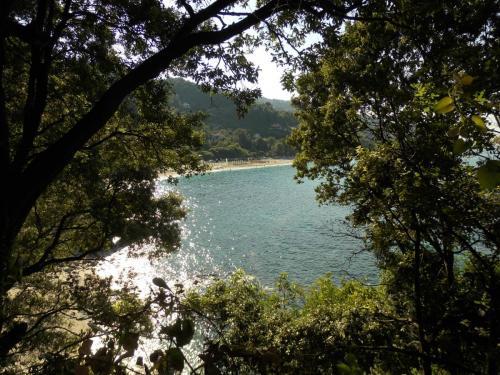 Papa Nero Beach 8g