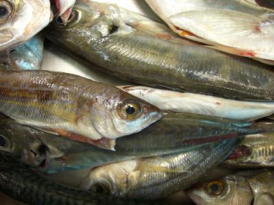Restaurant Fischers Fritze frischt frische Fische.